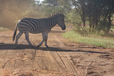 Free Photo Of Zebra Crossing On Dirt Road Stock Photos - 109922693