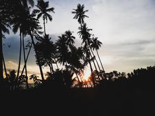 Free Silhouettes Of Palm Trees During Sunset Stock Images - 109922864