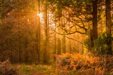Free Yellow Sunset Rays Passing Through The Trees Stock Photos - 109922903