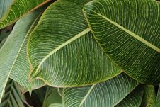 Free Close-Up Photography Of Green Leaves Stock Image - 109922931