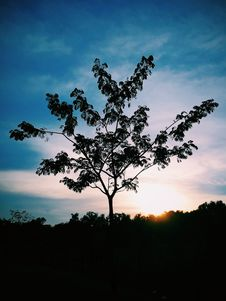 Free Silhouette Photo Of Tree Stock Photos - 109923043