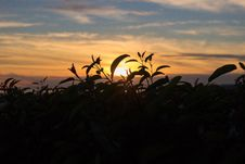 Free Silhouette Photography Of Plant During Golden Hour Royalty Free Stock Images - 109923109