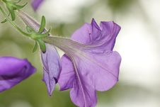 Free Purple Flower Selective Focus Photo Stock Images - 109923124