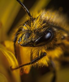 Free Close Up Photo Of Yellow And Black Wasp Royalty Free Stock Photography - 109923127