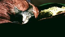 Free Closeup Photo Of Silver Tabby Cat On Red Textile Stock Image - 109923231