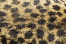 Free Brown And Black Textile Royalty Free Stock Images - 109923259