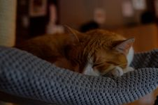 Free Orange Tabby Cat Sleeping On Gray Textile Stock Photo - 109923320