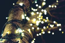 Free Yellow String Lights On Brown Tree Stock Photos - 109923353