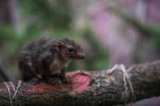 Free Selective Focus Photography Of Brown Rodent Royalty Free Stock Image - 109923406