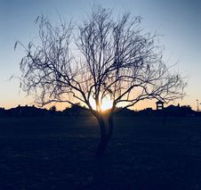 Free Silhouette Of Bare Tree During Sunset Royalty Free Stock Photos - 109923408
