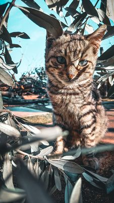 Free Tabby Cat Beside Green Plant Stock Images - 109923514