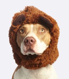 Free Dog With Brown Faux Fur Headband Stock Photos - 109923683