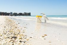 Free White Seagull On Seashore Beside Plastic Container Stock Photo - 109923720