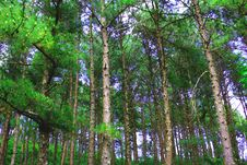 Free Photo Of Forest Stock Photography - 109923912