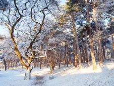 Free Woodland During Snow At Daytime Royalty Free Stock Photos - 109924108