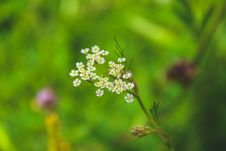 Free Selective Focused Of White Petaled Flower Royalty Free Stock Photos - 109924118
