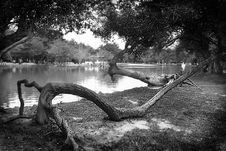 Free Gray Scale Photography Of Body Of Water Surround By Trees Royalty Free Stock Images - 109924189
