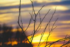 Free Shallow Focus Photography Of Leafless Tree Branch During Sunset Stock Photography - 109924272