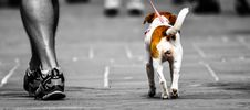 Free Selective Photography Of Person Walking A Dog Royalty Free Stock Image - 109924516