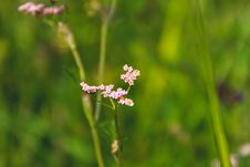 Free Cluster Pink Petaled Flowers In Bloom At Daytime Stock Photography - 109924532