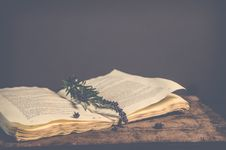 Free Sepia Photography Of Green Plant On Top Of Open Book Stock Photo - 109924640