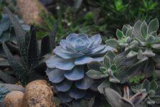 Free Echeveria Succulents And Panda Plant Closeup Photography Stock Photo - 109924680