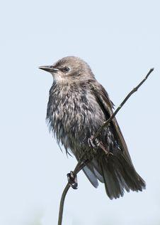 Free Black And Gray Bird On Tree Brunch Stock Photos - 109924683