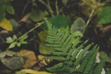 Free Close-Up Photography Of Fern Royalty Free Stock Photography - 109924687