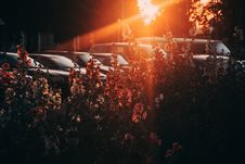 Free White And Orange Flowers With Sun Rays Photography Stock Photography - 109924732