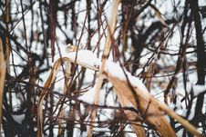 Free Close-up Photo Of Snow On Dried Leaf Stock Photography - 109924742