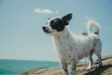 Free Adult Short-coated White And Black Dog On Gray Stone Near Body Of Water Royalty Free Stock Image - 109924746