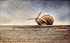 Free Close-up Photography Of Brown Snail On Brown Wooden Surface Stock Photos - 109924803