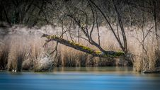 Free Dead Tree By The River Royalty Free Stock Photography - 109924877
