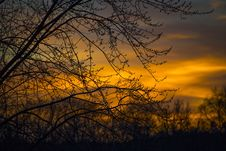 Free Silhouette Photo Of Branches Of Tree During Dusk Stock Image - 109925401