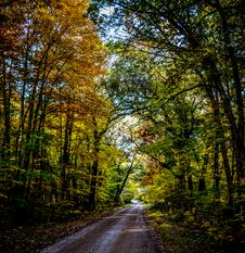 Free Photo Of Empty Road With Green Leaf Trees On Both Side Of The Road Stock Photo - 109925410