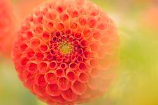 Free Close-Up Photography Of Orange Dahlia Flower Royalty Free Stock Photo - 109925495