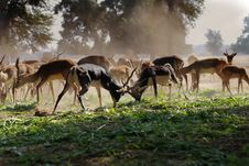 Free Flock Of Brown Deer On Green Grass Field Royalty Free Stock Image - 109925496