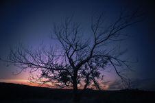 Free Photo Of Autumn Tree During Sunset Royalty Free Stock Photo - 109925745