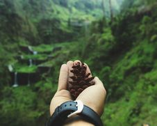 Free Macro Shot Of Person Holding Pinecone Royalty Free Stock Photography - 109925787