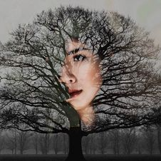 Free Woman S Face With Bare Tree Artwork Royalty Free Stock Photography - 109925797