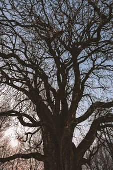 Free Black Leafless Tree Royalty Free Stock Photo - 109925835