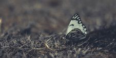 Free White And Black Butterfly On Grass In Close-up Photography Stock Photo - 109926170