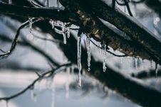 Free Frozen Water Droplet On Tree Branch Stock Photography - 109926212