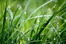 Free Macro Photography Of Droplets On Grass Stock Photos - 109926303