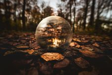 Free Selective Focus Photography Of Clear Glass Ball On Brown Leaves On Ground Stock Photography - 109926342