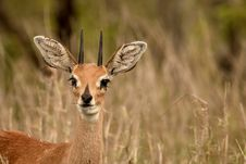 Free Selective Focus Photography Of Brown Deer Stock Image - 109926471