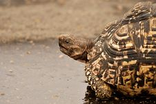 Free Brown Tortoise On Wet Surface Stock Image - 109926511