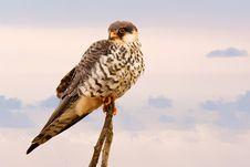 Free Brown Short Peak Bird Perch On Brown Tree Branch Stock Photo - 109926820