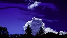 Free Trees Under White Clouds And Blue Sky Stock Images - 109926974
