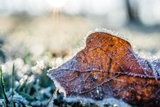 Free Dried Leaf Cover By Snow At Daytime Royalty Free Stock Image - 109926996